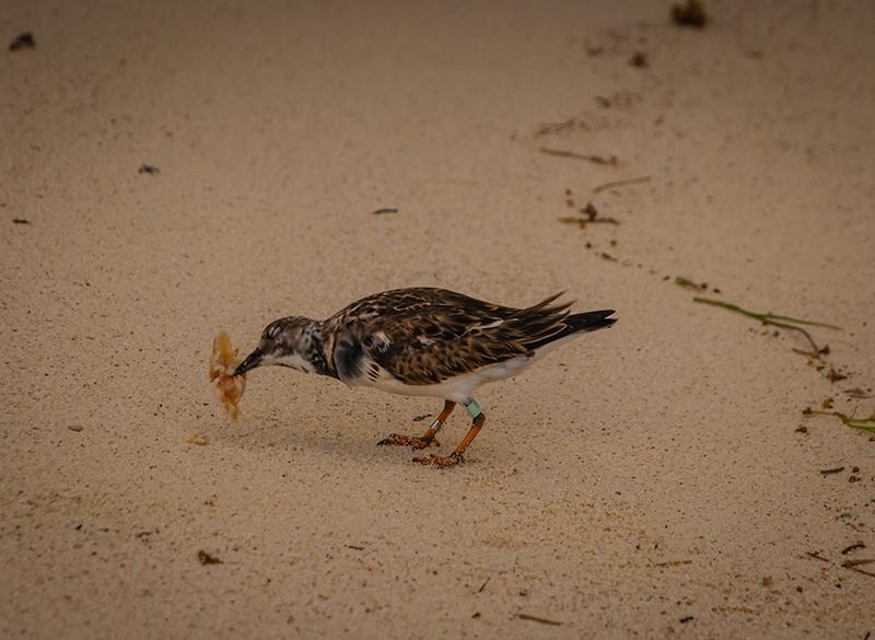 birdeat