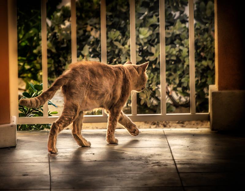 skinnycat