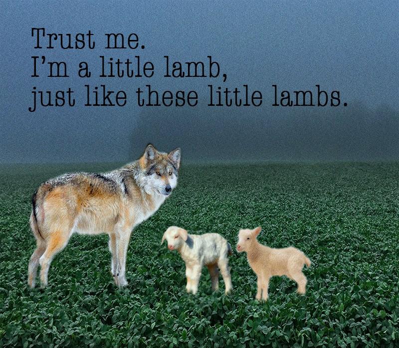 lambwolf