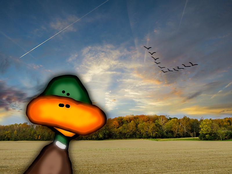 duckfly