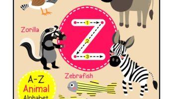 Kindergarten Letter Z Picture Card worksheet
