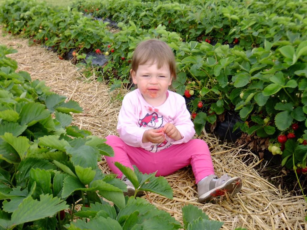 Erdbeer-Ausflüge