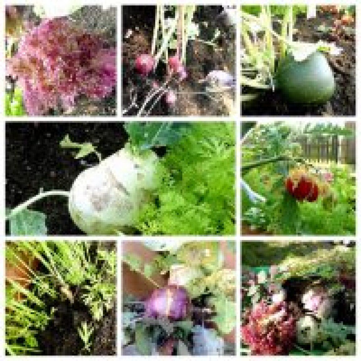 Kita Jersbek Gemüsebeet Aktion 2019