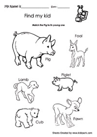Match The Pig and its Young One,Science Teachers Resources