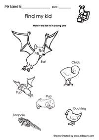 Nature Science Worksheets For Kids,Teacher Printable