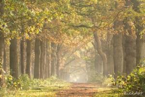 Zonlicht tussen de bomen