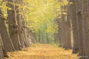 Doorkijkje in een herfstachtig Midwolderbos