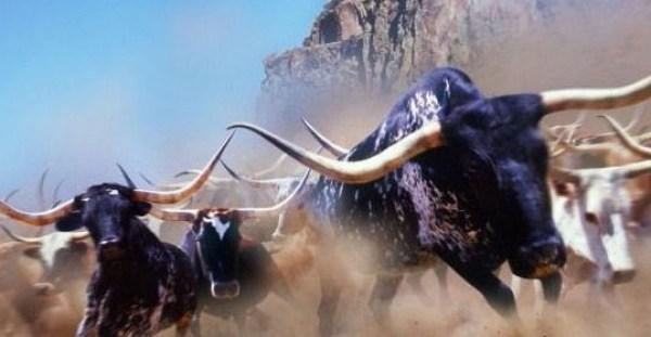 Rampaging Herd - 001