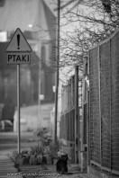 street cats of Szczecin 005