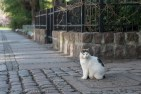 street cats of Szczecin 006