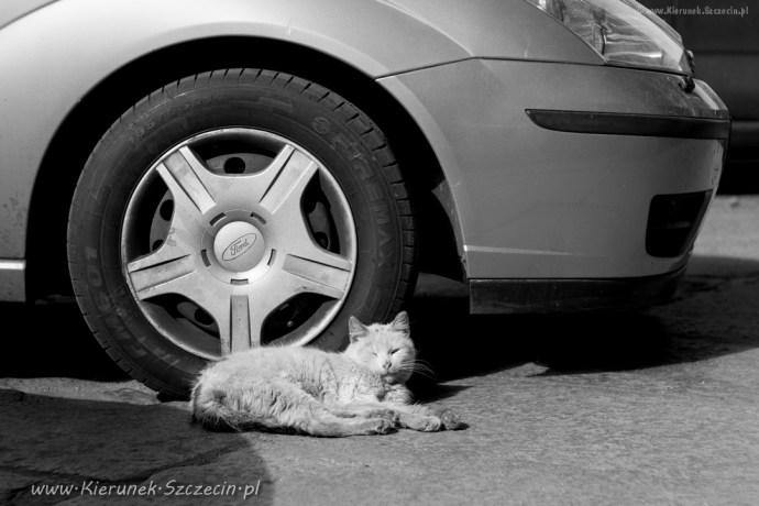 street cats of Szczecin 007