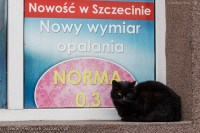 street cats of Szczecin 011