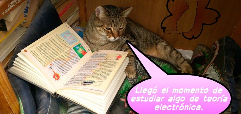 Grissy estudiando teoría electrónica