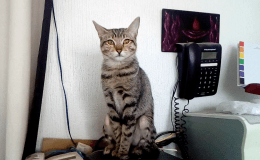 Gatito amplificador de Wi-Fi