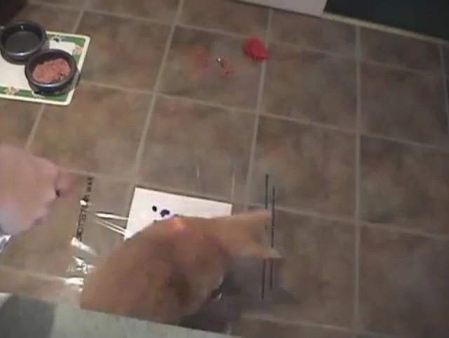 Gato pintando
