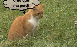 Gatos y GPS