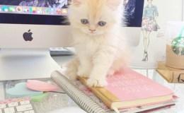 Gatito y Mac