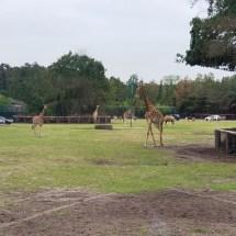 Safariland - Sommer-2019 - KiJu Neheim (8)