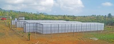 Pre Entry Quarintine Nursery for Coconut Seedlings