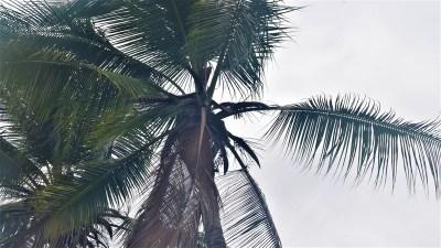 The Bogia Coconut Syndrome