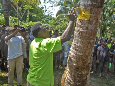 Palm Selection training at Tikana in New Ireland Province.