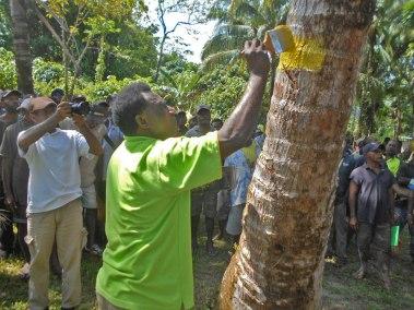 Palm Selection training at Tikana in New Ireland Province.