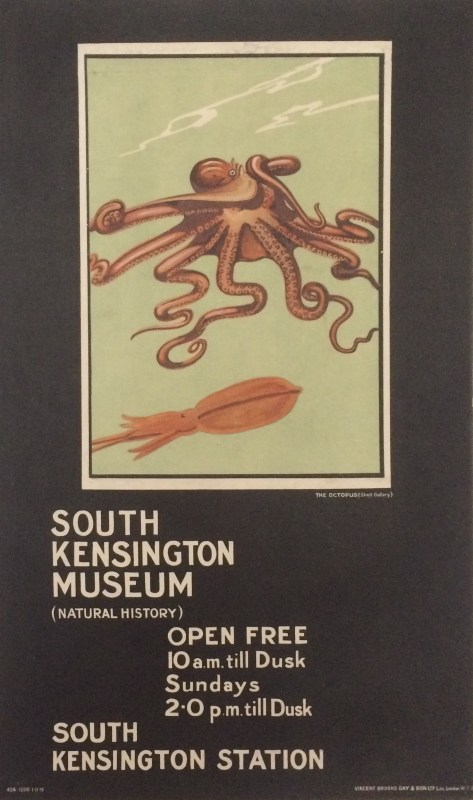 Two Octopus on show at South Kensington Museum.