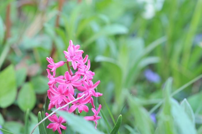 The Flowers of Spring | Kiku Corner