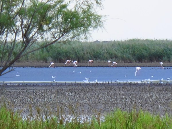 One Afternoon in the Camargue