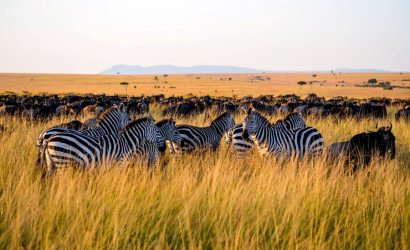 10 Day Serengeti Lake Victoria Tour