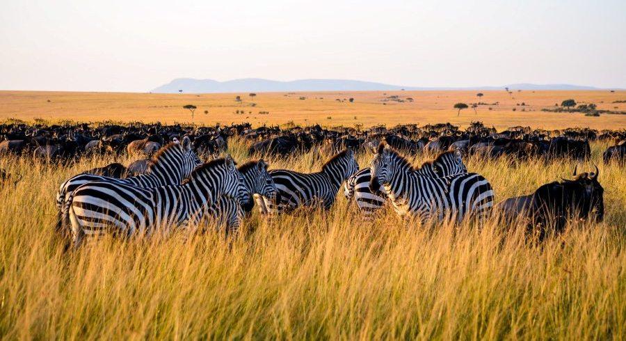 10 Day Serengeti Lake Victoria Tour