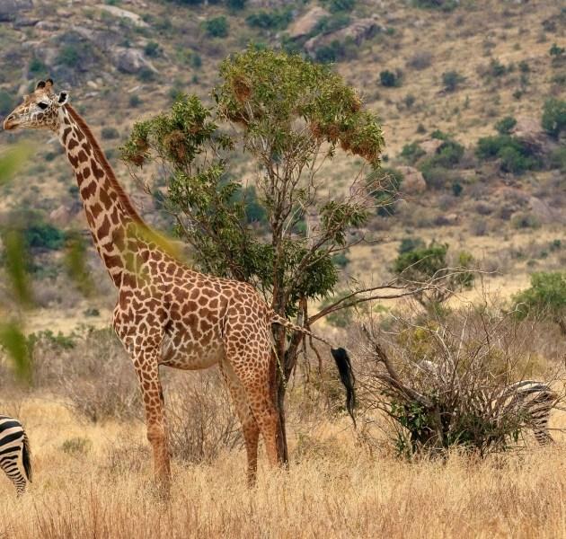 9 Days Kenya Adventure Safari