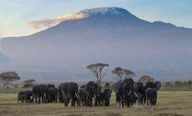About Kilimanjaro