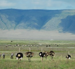 Wildlife in Ngorongoro Crater