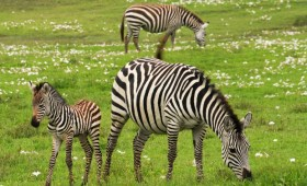 Tanzania's ecotourism