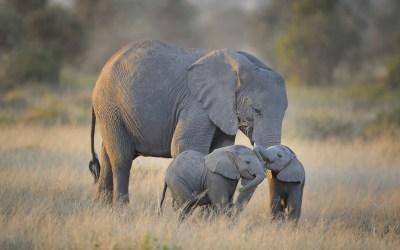 3 Days Tanzania Group Joining Safari