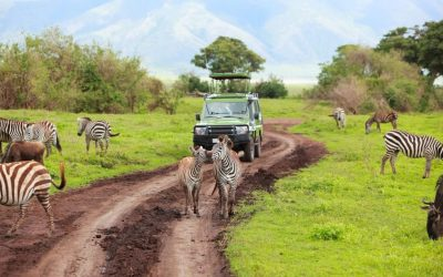 7 DAYS SERENGETI AND NGORONGORO ADVENTURE SAFARI