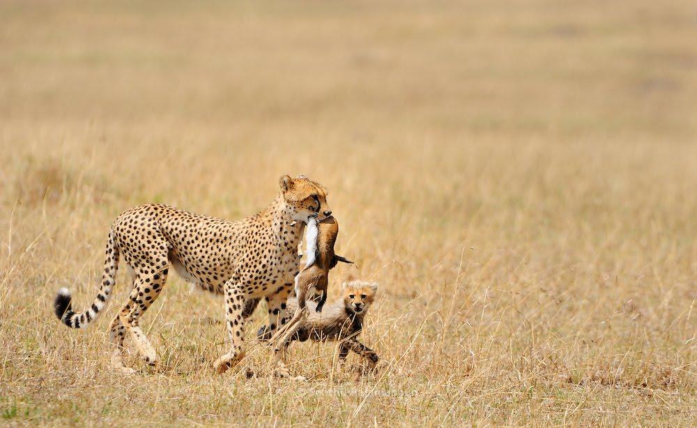 9 Days Explore Northern Circuit Safari In Tanzania