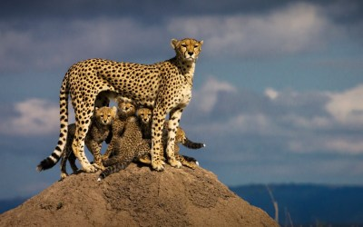 6 Days Tanzania Group Joining Safari