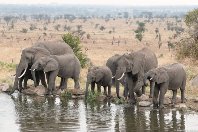7 DAY TANZANIA SPECIAL TENTED CAMPS SAFARI