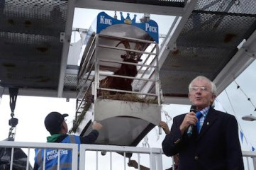 Watched by the bearded monarch, Puck Fair chairman Declan Mangan, gives the command to bring King Puck, a wild mountain goat, down from his throne