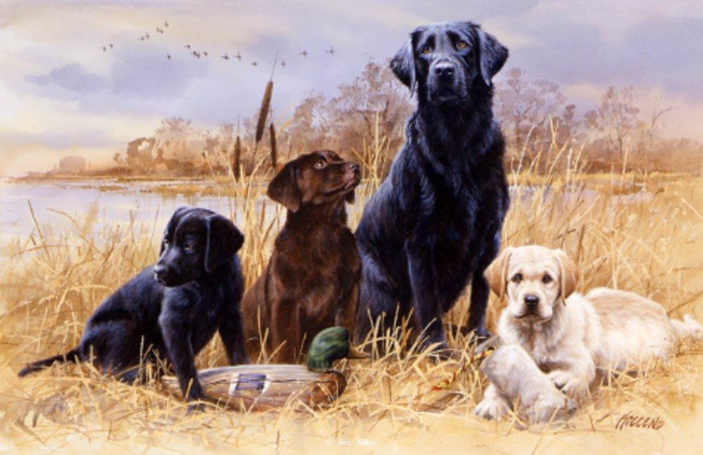 """A Day in the Marsh"" - Labrador Retriever Paintings by Jim Killen"