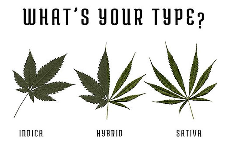 Sativa and Hybrid
