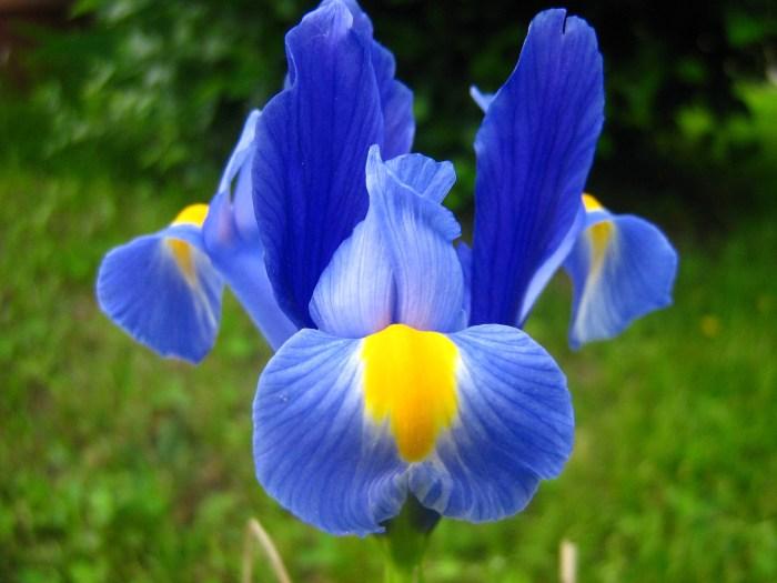 flower-784688