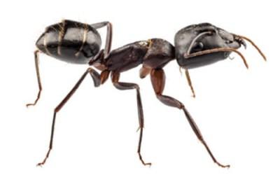 Gel pour lutter contre les fourmis