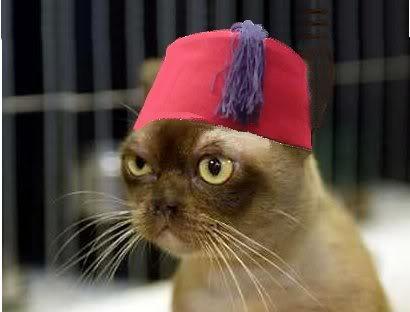 cat-in-a-fez