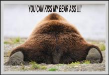 Bear3454 avatar