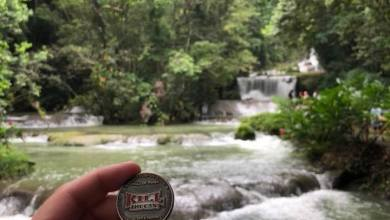 Photo of Chewie at YS Falls in Jamaica