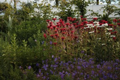 Kilmurry Nursery garden 15