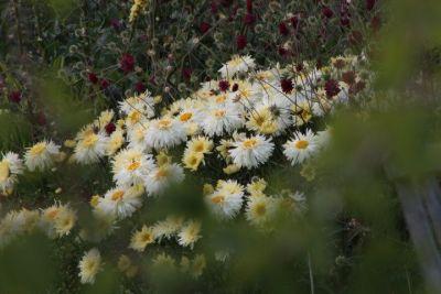 Kilmurry Nursery garden